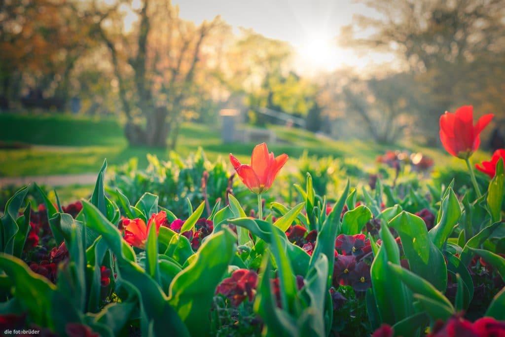 Blumenbeet beim Rosengarten vom Treptower Park in der Abendsonne